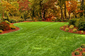 Fall lawn care tips shank 39 s lawn blog - Autumn lawn care advice ...