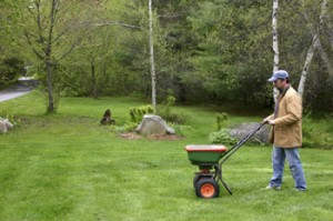 Tips for fertilizing your lawn before winter shank 39 s lawn blog - Winter lawn care advice ...