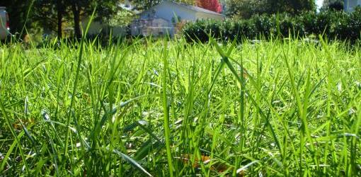 spring-lawn-care-guide-2