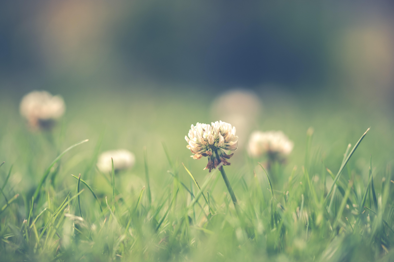 Shank's Lawn Blog