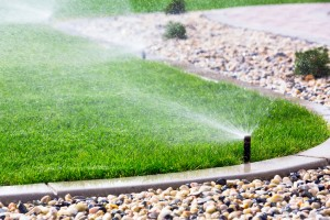 Watering Your Lawn in the Summer