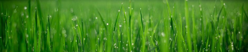 spring fertilizing